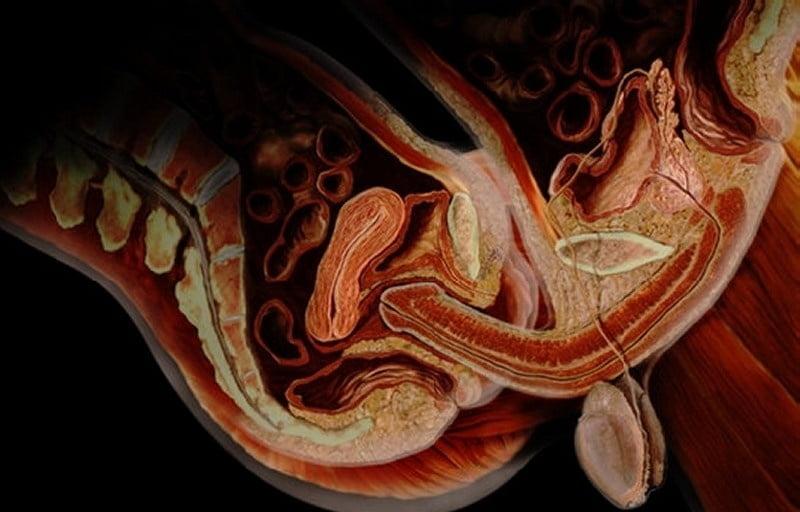 анатомия полового акта изнутри в разрезе смотреть видео онлайн сабачьи пробудит