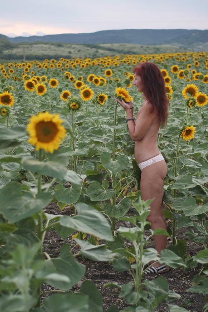 Sunflowers - 34 Pics