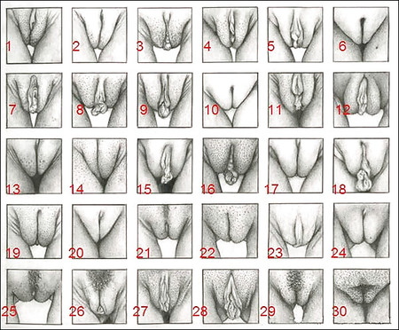 Different Pussy Shapes