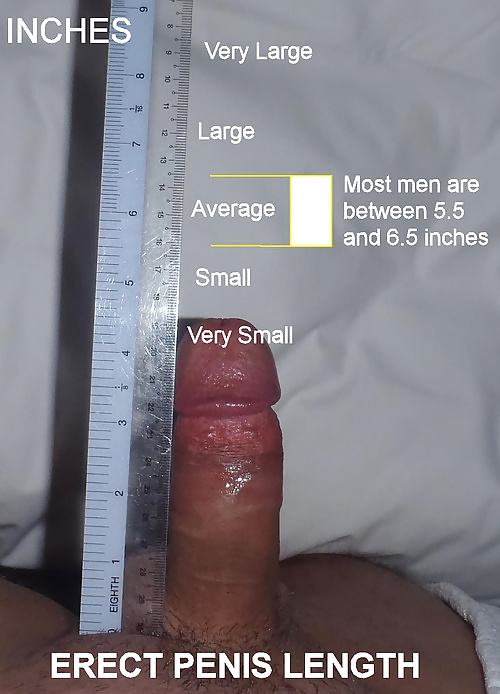 penis-size-of-porn