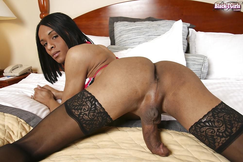 Ebony Shemale Favorites