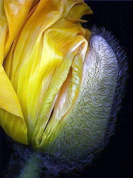 Vagina flower painting